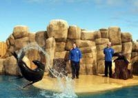thumb_1863-rhyl-sea-aquarium-1