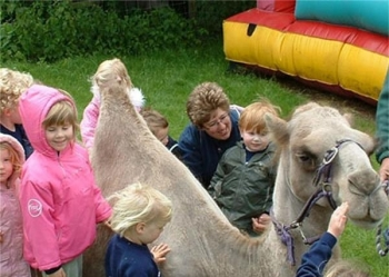 thumb_2450-oasis-camel-park-1