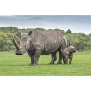 West Midland Safari and Leisure Park Worcestershire - Forth Image