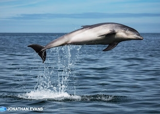 New Quay Dolphin Spotting Boat Trips - Main Image