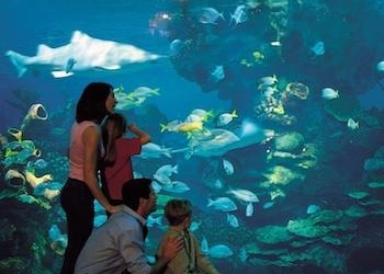 thumb_blue-planet-aquarium-1