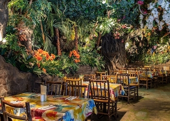 rainforest-cafe-2