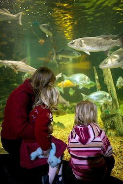 Anglesey Sea Zoo and Marine Resource Centre Wales - Third Image