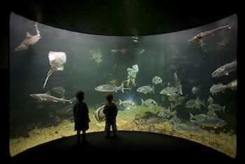 Anglesey Sea Zoo and Marine Resource Centre Wales - Forth Image
