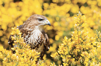 Coda Falconry Bird of Prey Experiences Essex - Second Image