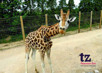 Twycross Zoo - Second Image