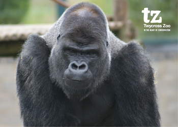 Twycross Zoo - Third Image