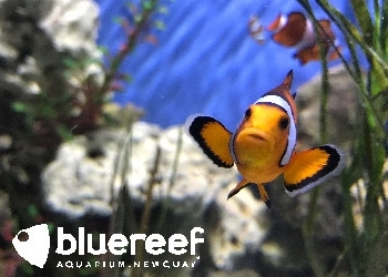 blue-reef-aquarium-4