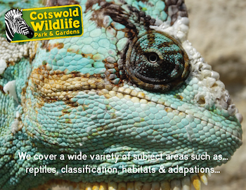 Cotswold Wildlife Park and Gardens - Third Image