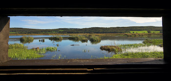 RSPB Leighton Moss Nature Reserve - Second Image