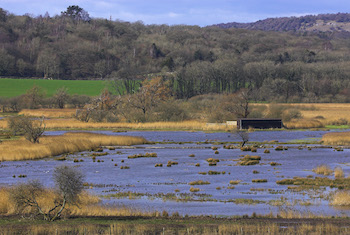 RSPB Leighton Moss Nature Reserve - Third Image