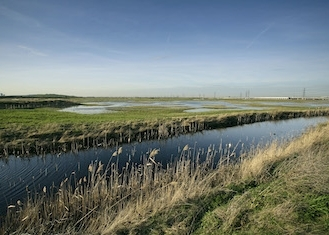 rspb-rainham-marshes-3